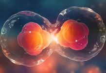 celulas madre mitos realidades